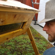 Geert looking at his bees