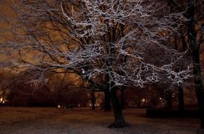 Amsterdam Aperture: Winter Wonderland