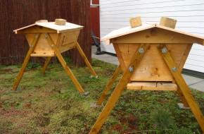 Get urban, go bee-keeping!