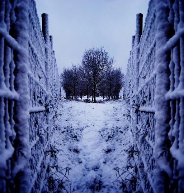 Fences by Rutger Houweling & Tamar Weenen